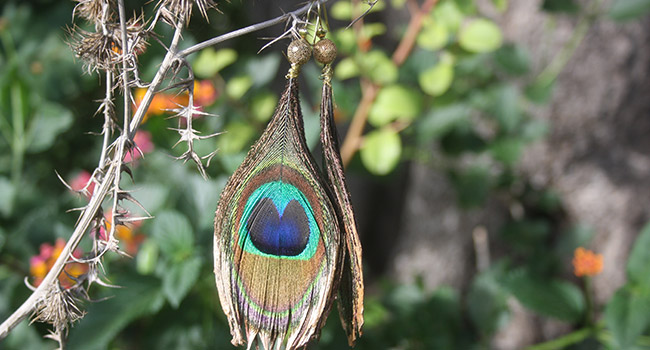 earrings peacock feathers